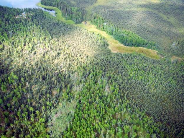 Alaska land for sale near lake over 8 acres Fairbanks area near hot springs