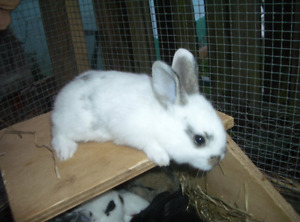 LOVELY BUNNIES AND CAGE INCLUDED SALE!!!