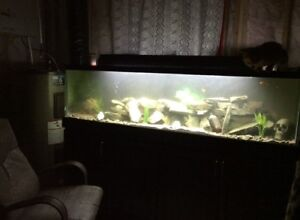 120 gallon tank with stand
