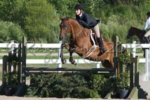 LF: Equestrian Eventing Stable