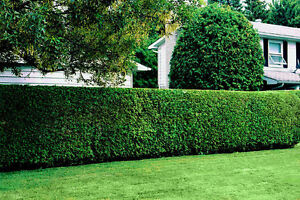 Quality Lawn Cutting and Garden Care Services Kitchener / Waterloo Kitchener Area image 1