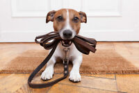 Pet Sitting And Pet Walking services Neepawa And Area