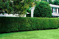 Quality Lawn Cutting, Garden Care Services and Sidewalk Edging