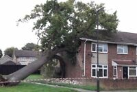 Fallen tree? Broken branches? Storm damage? Call (647)454 6127!