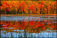 Fall colors scenic guided tour