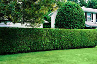 Quality Lawn Cutting and Garden Care Services