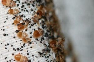 Dealing with those pesty bed bugs? We can help!!!!