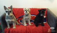 Fun,home away from home for friendly small dogs since 2010!