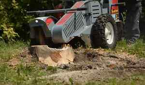 TREE STUMP REMOVAL/GRINDING >book now and save $$$$$ Kitchener / Waterloo Kitchener Area image 2
