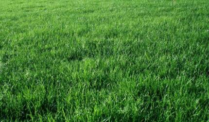 Advanced Seed Pasture Booster Blend 20kg