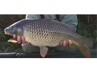 Carp fishing tackle wanted