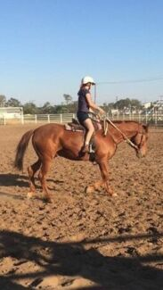 Stock horse gelding  Narrabri Narrabri Area Preview