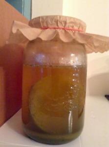Kombucha Organic Tea Starter Kit- Scoby (Pick up Bloor/Spadina)