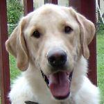 patton_puppy