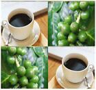 Coffee Bean Seeds