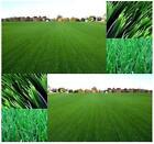 Bulk Grass Seed