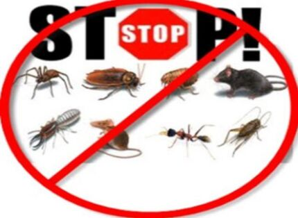 Pest control only this month special 2bedroom unit $80 warranty 24/7