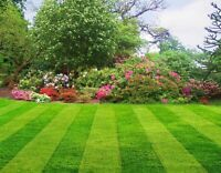 Professional grass cutting and lawn maintenance!