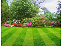 Gardening and Tree Cutting Removal