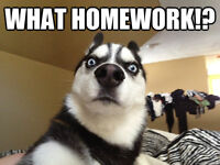 We complete homework for students!