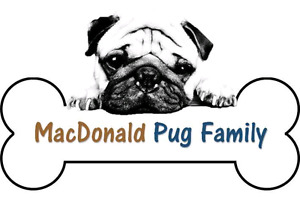 Purebred Pug Puppies (from a breeder)