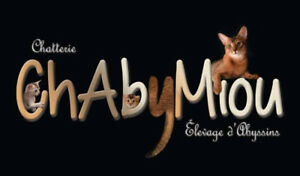 Chatons Abyssins de la Chatterie ChAbyMiou