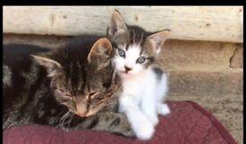 Last little boy kitten left