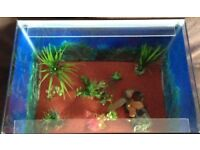 "Ex-display fish tank 18"" X 12"" X 12"" (ideal for FRY)"