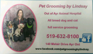 Dog and Cat Grooming services in Ayr