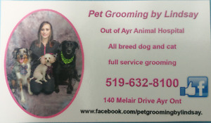 Dog and Cat Grooming February Special