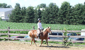 Package of 4 private lessons/month on a trained pony, certified Kitchener / Waterloo Kitchener Area image 6