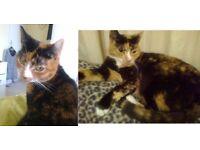 Lost tortoiseshell cat