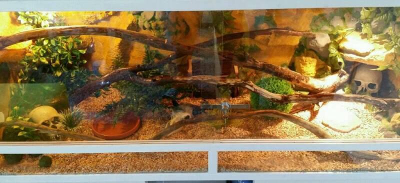 kornnattern mit zubeh r in kiel pries friedrichsort ebay kleinanzeigen. Black Bedroom Furniture Sets. Home Design Ideas