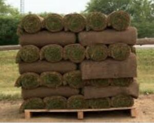 Top Quality sod for less. $0.29 a sq ft