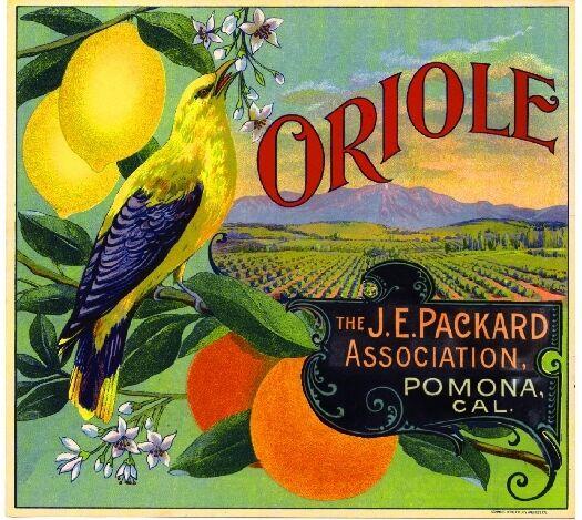 Pomona Los Angeles County Oriole Bird Orange Citrus Fruit Crate Label Art Print