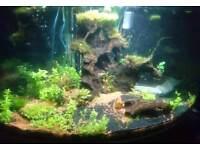 350 ltr fishtank