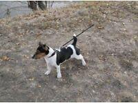 Caring professional dog walker&sitter Hackney, Clapton