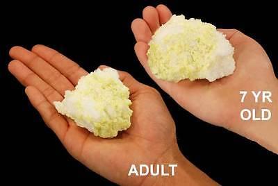"Sulfur Selenite 2"" Rock and Mineral Specimen Solar Plexis Chakra Healing Crystal"