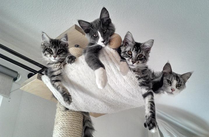 witzige geschenke f r ihre katzen kratzb ume vom feinsten ebay. Black Bedroom Furniture Sets. Home Design Ideas