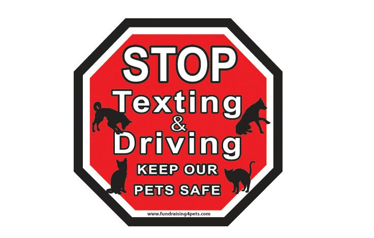 STOP TEXTING & DRIVING,Keep Our Pets Safe STOP Magnet,Dog Cat Charity Rescue