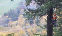Service d'arbres Bellechasse
