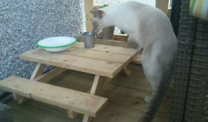 Picnic table pour animaux /for pets