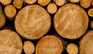 Looking for LOGS, ROUNDS, WOOD.