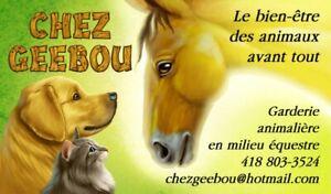Chez Geebou : garderie pour chiens, chats et lapins