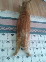 lost ginger cat hantsport