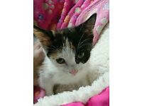 Gorgeous 9 week old kitten for sale