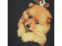 Pomeranian puppies ready 28th dec