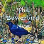 The Bowerbird Nest