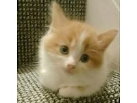 Kittens £125