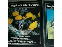 Tropical fish hobbyist